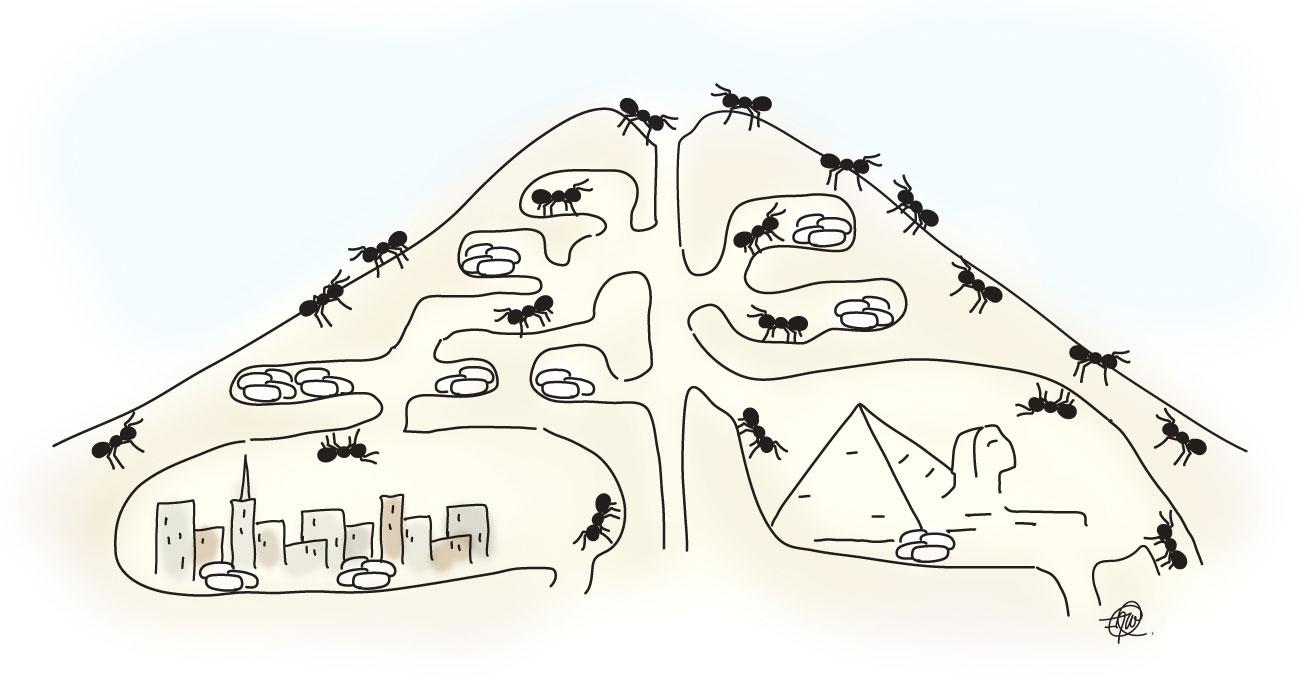 Ant City